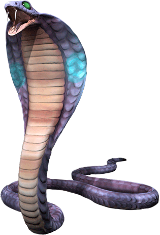 Picture of a Cobra